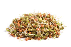 Lentil seeds Royalty Free Stock Photos