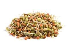 Lentil seeds Royalty Free Stock Photos