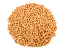 Lentil seeds Royalty Free Stock Photo