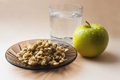 Lentil sprouts Stock Images