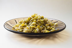 Lentil sprouts Royalty Free Stock Photos