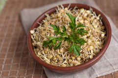 Lentil sprouts Stock Photo