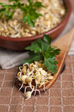 Lentil sprouts Royalty Free Stock Images