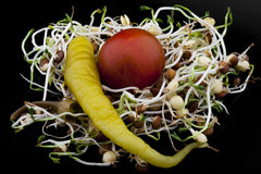 Lentil sprouts salad with cherry tomato and chili pepper Royalty Free Stock Photo