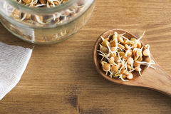Lentil Sprouts in Wooden Spoon Royalty Free Stock Images