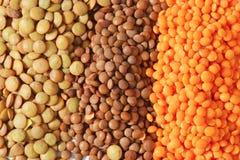 Lentil varieties Royalty Free Stock Images