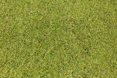 Lentilha-d'água comum verde foto de stock royalty free
