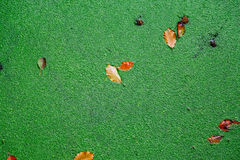 A lentilha-d'água verde cobre a lagoa pequena imagens de stock royalty free