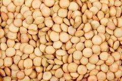 Lentilhas de Brown macro para o fundo Imagem de Stock Royalty Free