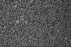 Lentilhas pretas da beluga imagens de stock royalty free