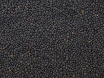 Lentilhas pretas secadas da beluga imagens de stock royalty free