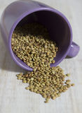 Lentill commun dans un verre violet Photo libre de droits