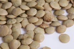 Lentille (culinaris de lentille) Photos libres de droits