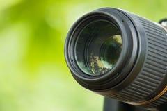 Lentille dans le backgroud vert Image libre de droits