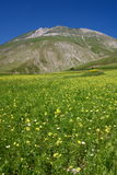 lentille s Ombrie de fleur Images libres de droits