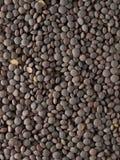 Lentilles image stock