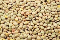 Lentilles dans le macro Image stock