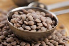 Lentilles organiques sèches de Brown Photo stock