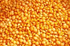 Lentilles rouges Photo stock