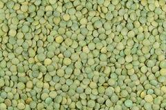 Lentilles vertes Photographie stock