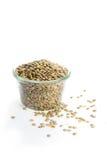 Lentilles vertes organiques pour la nourriture saine d'isolement sur le blanc Image stock