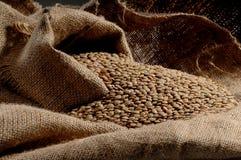 Lentils Stock Images