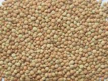 lentils Imagem de Stock