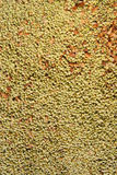 Lentils Background Royalty Free Stock Photos