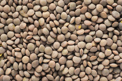 Lentils background Royalty Free Stock Photo