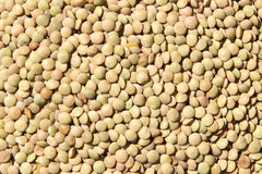 Lentils Royalty Free Stock Images