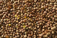 Lentils  brown Royalty Free Stock Photo