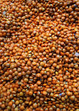 Lentils Stock Photo