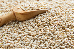 Lentils crop Royalty Free Stock Photo