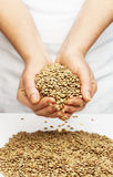 Lentils with hands. Royalty Free Stock Images