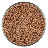 Lentils isolated on white Royalty Free Stock Photos