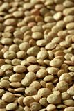 Lentils macro crop texture in brown color Royalty Free Stock Photography