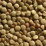 Lentils macro crop texture in brown color Stock Image