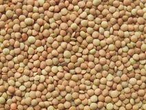 Lentils Stock Image