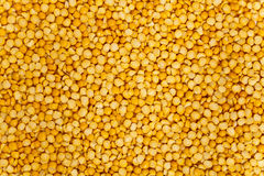 Lentils mix Royalty Free Stock Photo