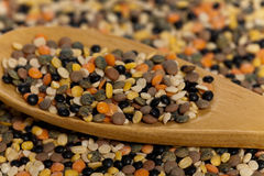 Lentils mix Stock Images