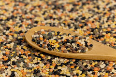 Lentils mix Royalty Free Stock Photos