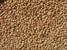 Lentils pulse grain legume Lens Culinaris legumes vegetables background Royalty Free Stock Photo