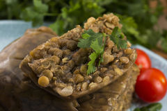 Lentils terrine with herbs Stock Photography