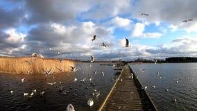 Lento-movimento da mosca da gaivota video estoque