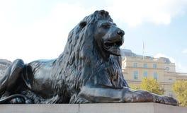 Leão escuro Imagem de Stock Royalty Free