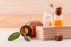 Óleo essencial do sábio natural dos ingredientes dos termas para a aromaterapia Fotos de Stock