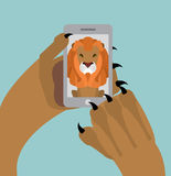 Leo selfie. Lion photographed themselves on phone. Angry wild an Stock Photography