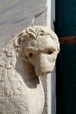 A leoa Fotos de Stock Royalty Free