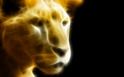Leoa na obscuridade Fotografia de Stock Royalty Free