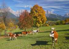Leogang Valley,SalzburgerLand,Austria Stock Photography